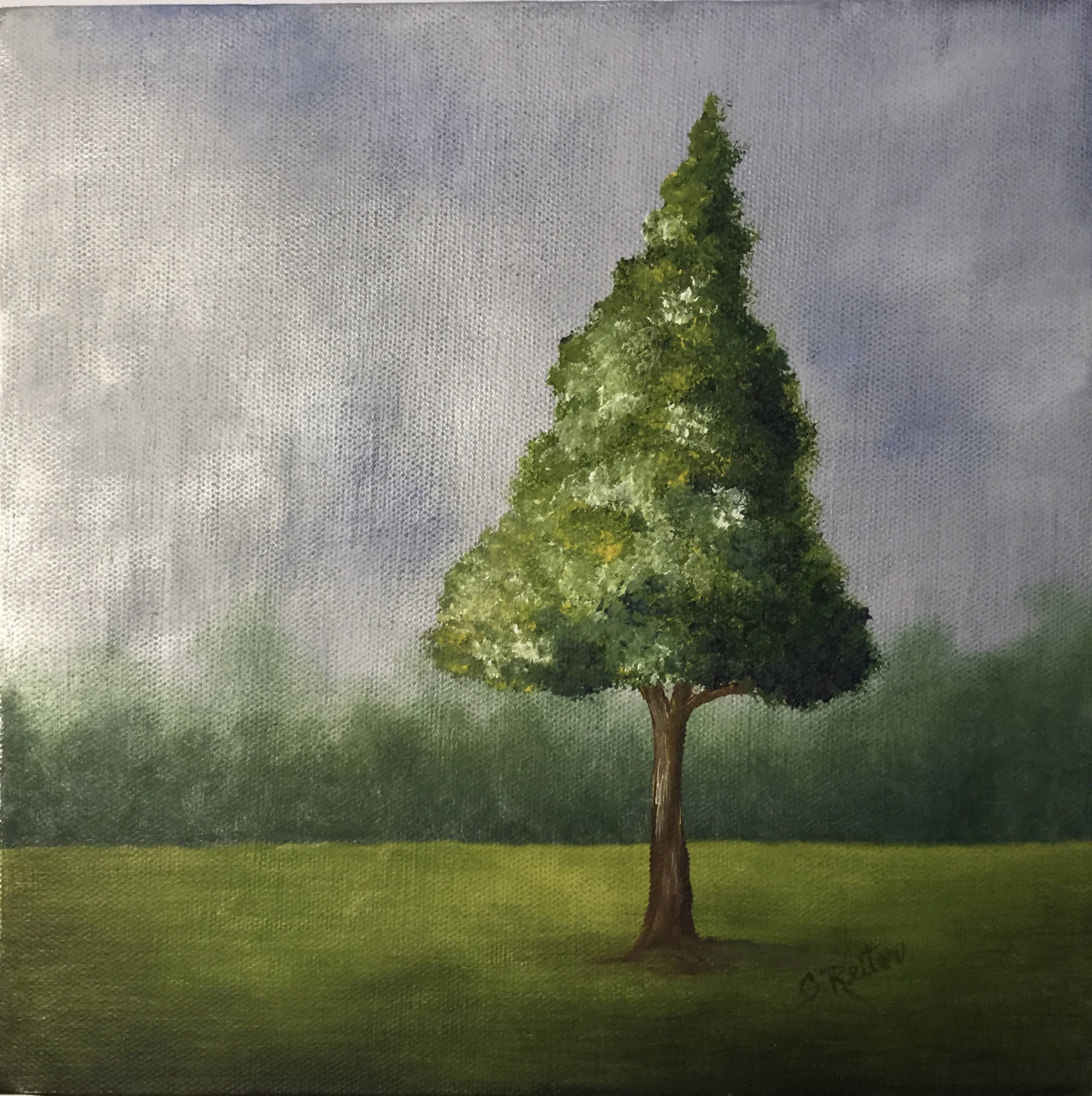 "10"" x 10"" Gallery Wrapped Canvas With a Oil Painting of a Tree in Spring - Series 3"