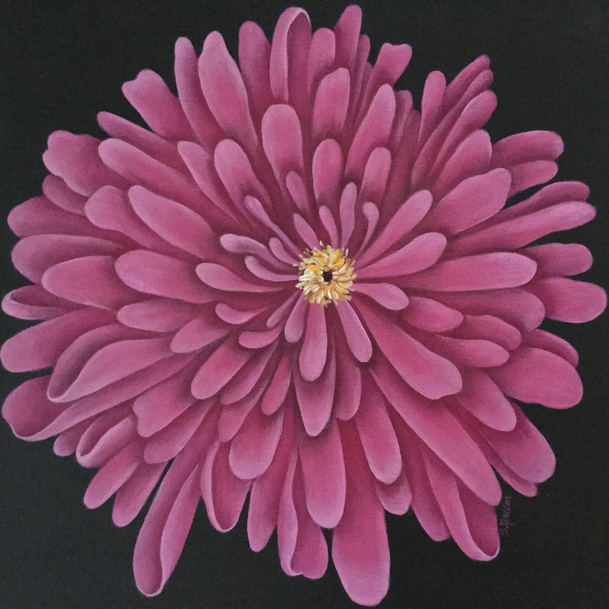 "12"" x 12"" Square Canvas with a Beautiful Hand Painted Rose Coloured Chrysanthemum"
