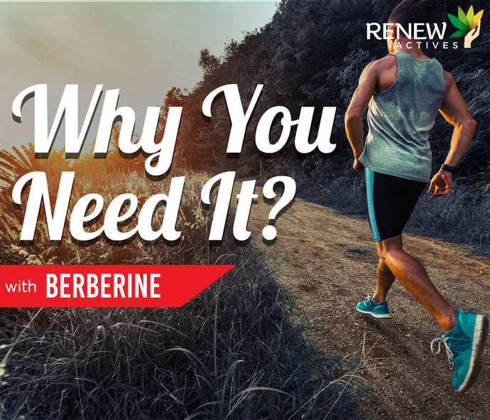 Berberine: Why You Need It?