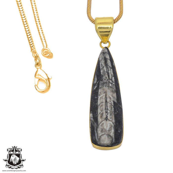 Orthoceras Fossil 24K Gold Plated Pendant 3mm Snake Chain GPH807