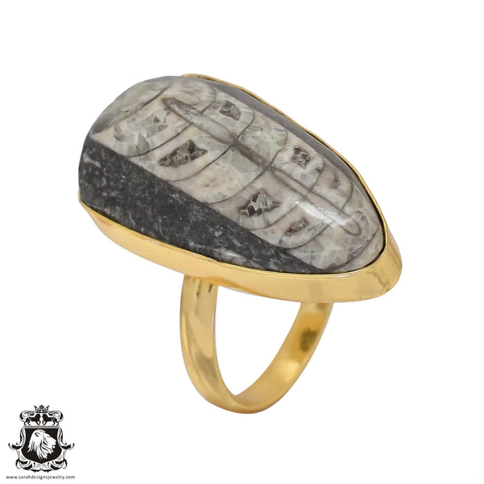 Size 9.5 - Size 11 Adjustable Orthoceras Fossil 24K Gold Plated Ring GPR463
