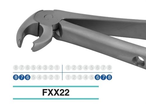 Adult Extraction Forcep, FXX22 - Osung USA
