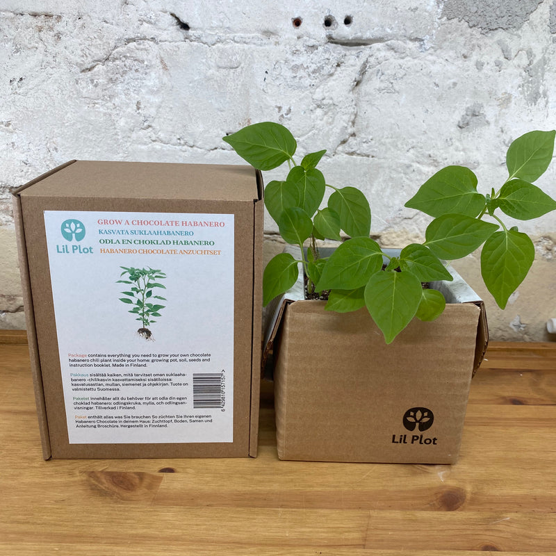 Chocolate Habanero Growing Kit