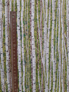 "Makower UK ""Landscape Silver Birch Wood"" by The Henley Studio"