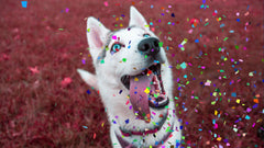 Multi-color Confetti Overlays