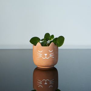 cache pot chat terracotta plante