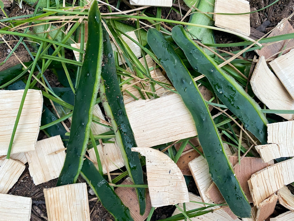 palm leaf plates pieces in compost
