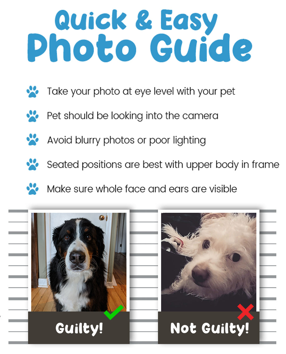 Photo Guidelines