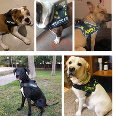 Customizable ID Tag Harness for Dogs with Reflective Name Labels - My Relaxed Pet