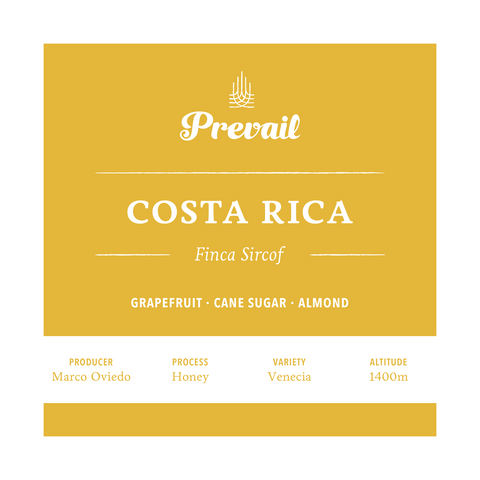 Costa Rica Finca Sircof - Prevail Coffee