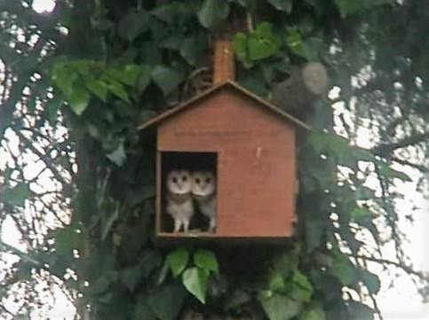 Barn Owl Box - EcoSolutions - Shop Now | South Africa
