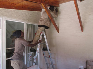 Bats in Your Roof? - EcoSolutions - Shop Now | South Africa