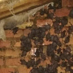 Bat Exclusion Consultation for Residential Properties - EcoSolutions - Shop Now | South Africa