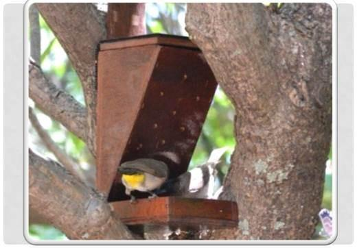 Maggot Bird Feeders - EcoSolutions - Shop Now | South Africa