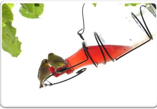 Nectar feeders - EcoSolutions - Shop Now | South Africa