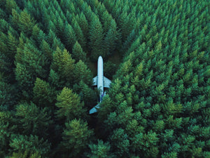 Trees (Flight Offset)