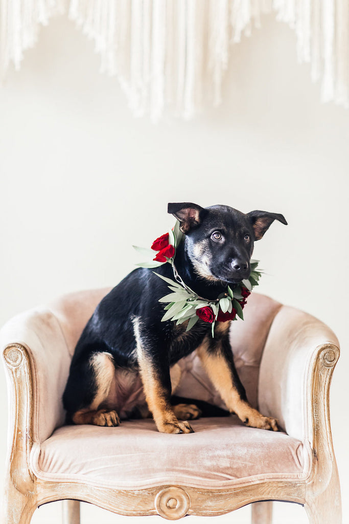 Dog wear flower crown| Boho Styled Shoot