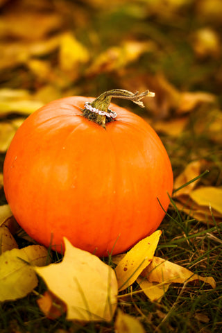 engagement ring on pumpkin | The Best Backyard Wedding Ideas