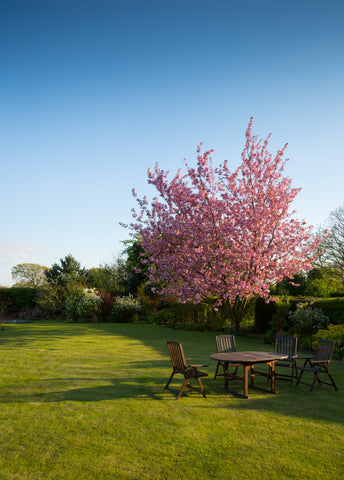 backyard with blooming tree | Best Backyard Wedding Ideas