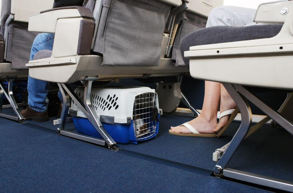 get a comfortable pet crate for the trip - OurCoordinates