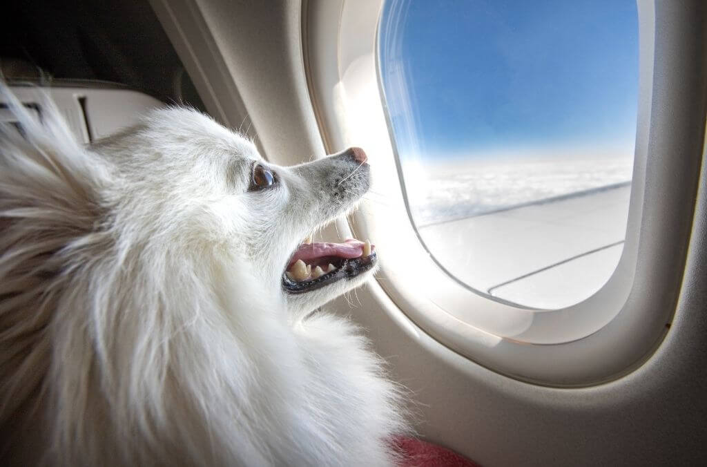 make your pet comfortable when traveling - OurCoordinates