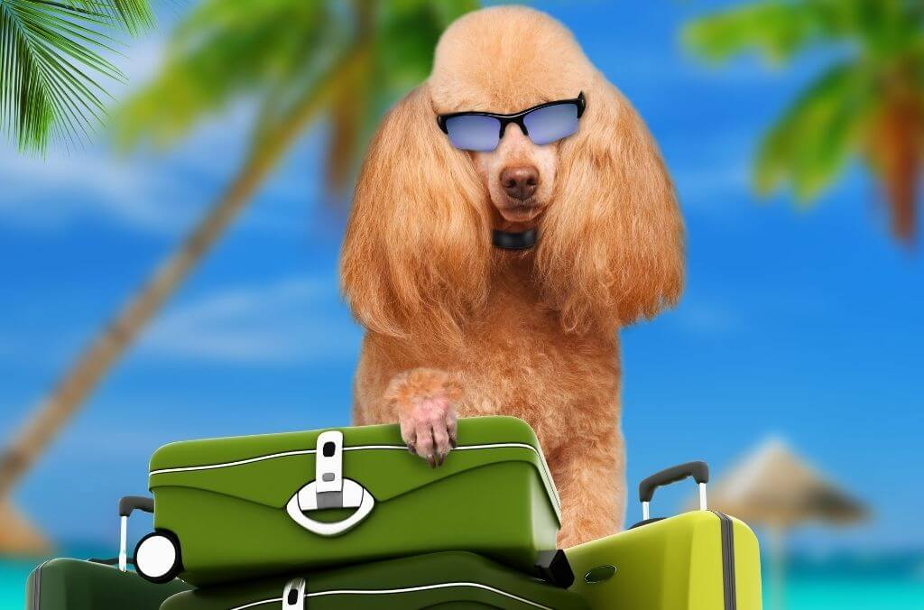 pet friendly travel packing - OurCoordinates