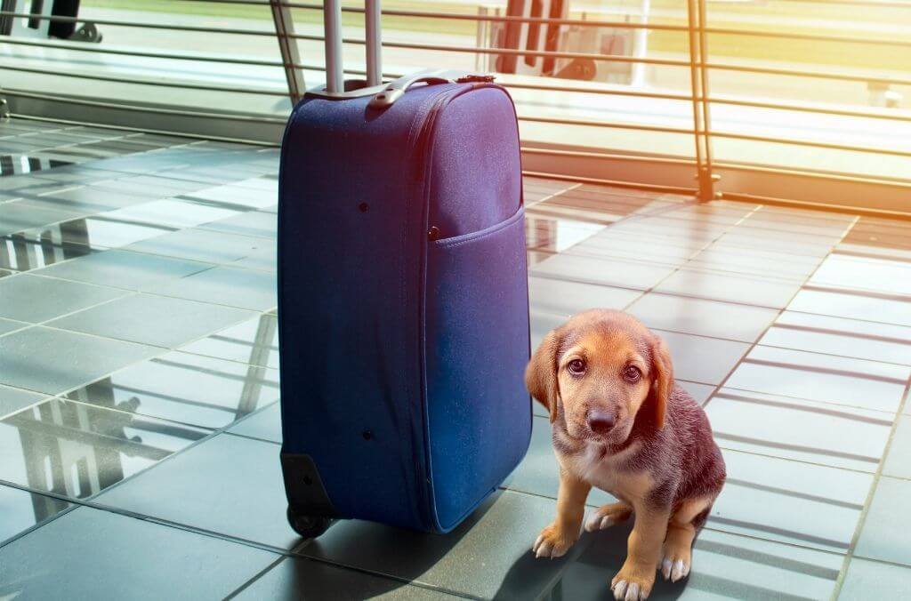 ultimate guide to traveling with pets - OurCoordinates