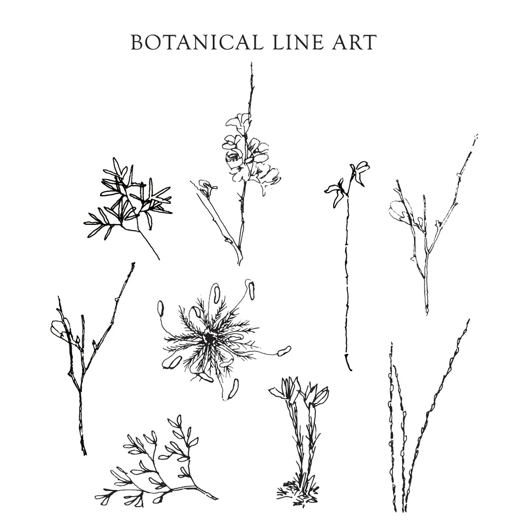 Botanical Line Art {Full Set} Digital Download