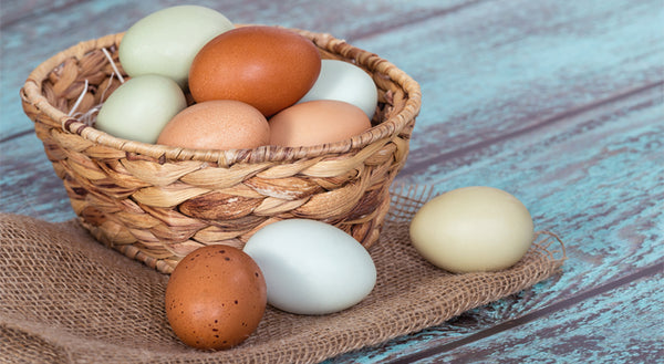 Hailed as a complete protein source, not all eggs are made equal