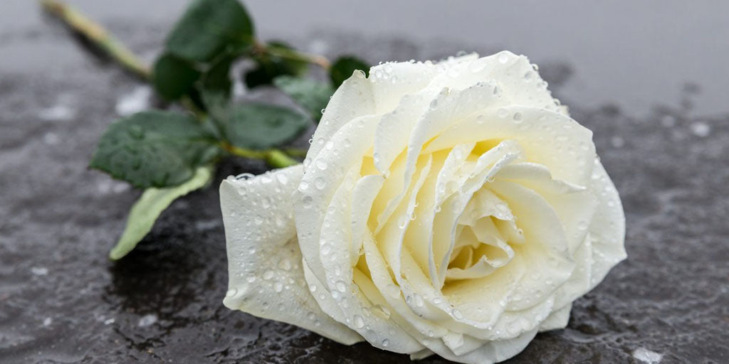 Quand Offrir des Roses Blanches ?