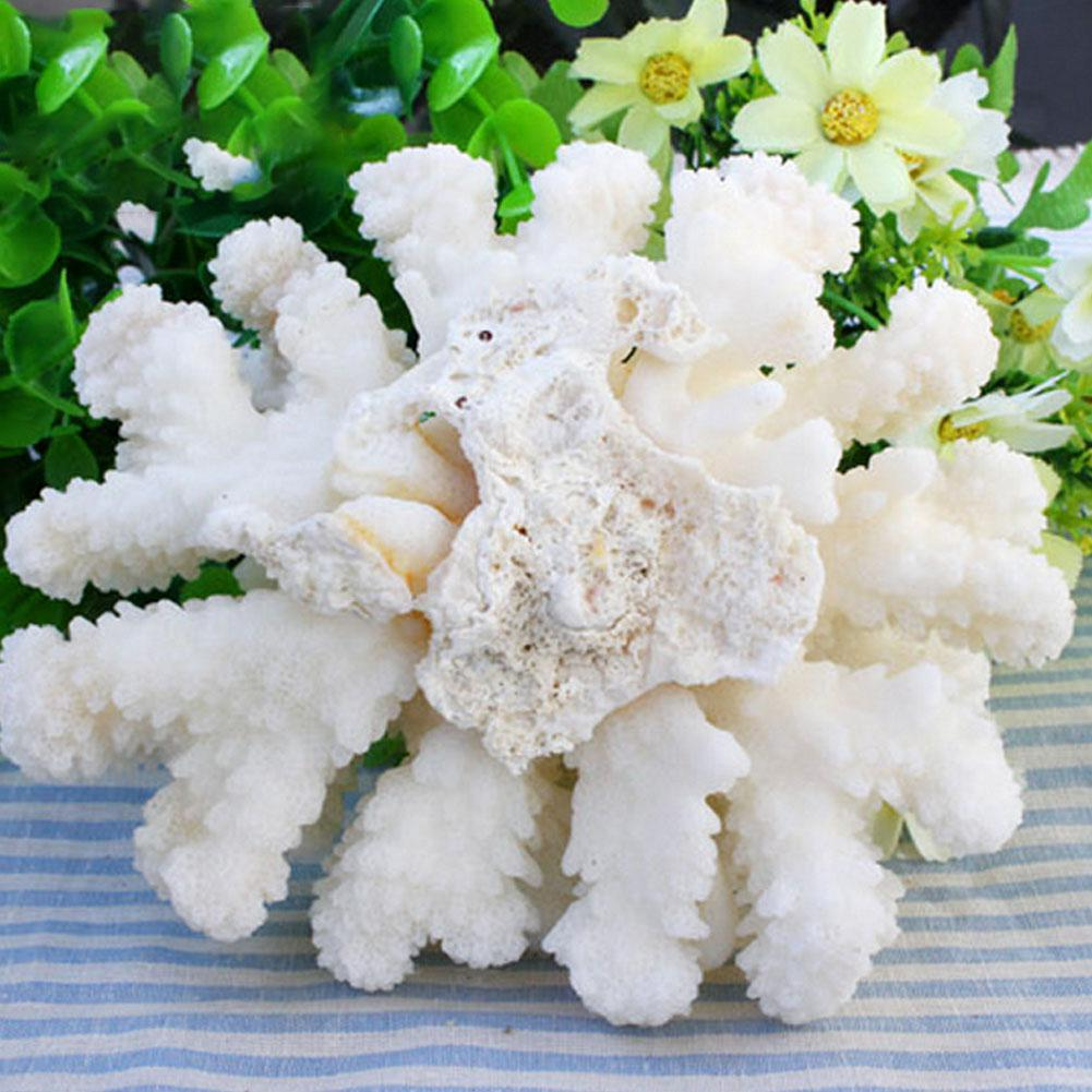 Elegant White Coral Decoration