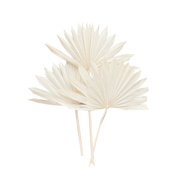 Bleached White Sun Palms (set of 6)