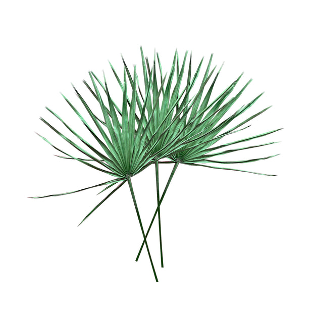 Dried Palm Leaf (set of 3)