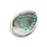 Blue Abalone Shell