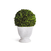 Boxwood Ball Topiary