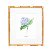 Blue Hydrangea Watercolor Print