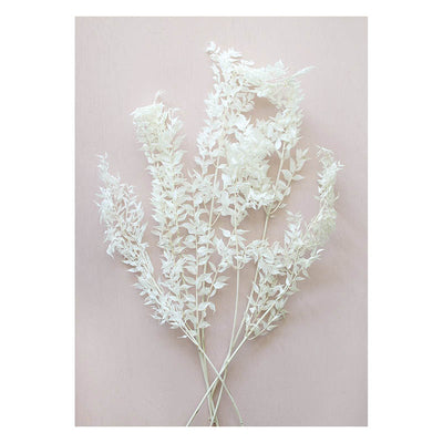 Bleached White Ruscus Leaves (set of 5)
