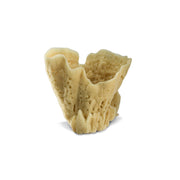 Decorative Vase Sea Sponge