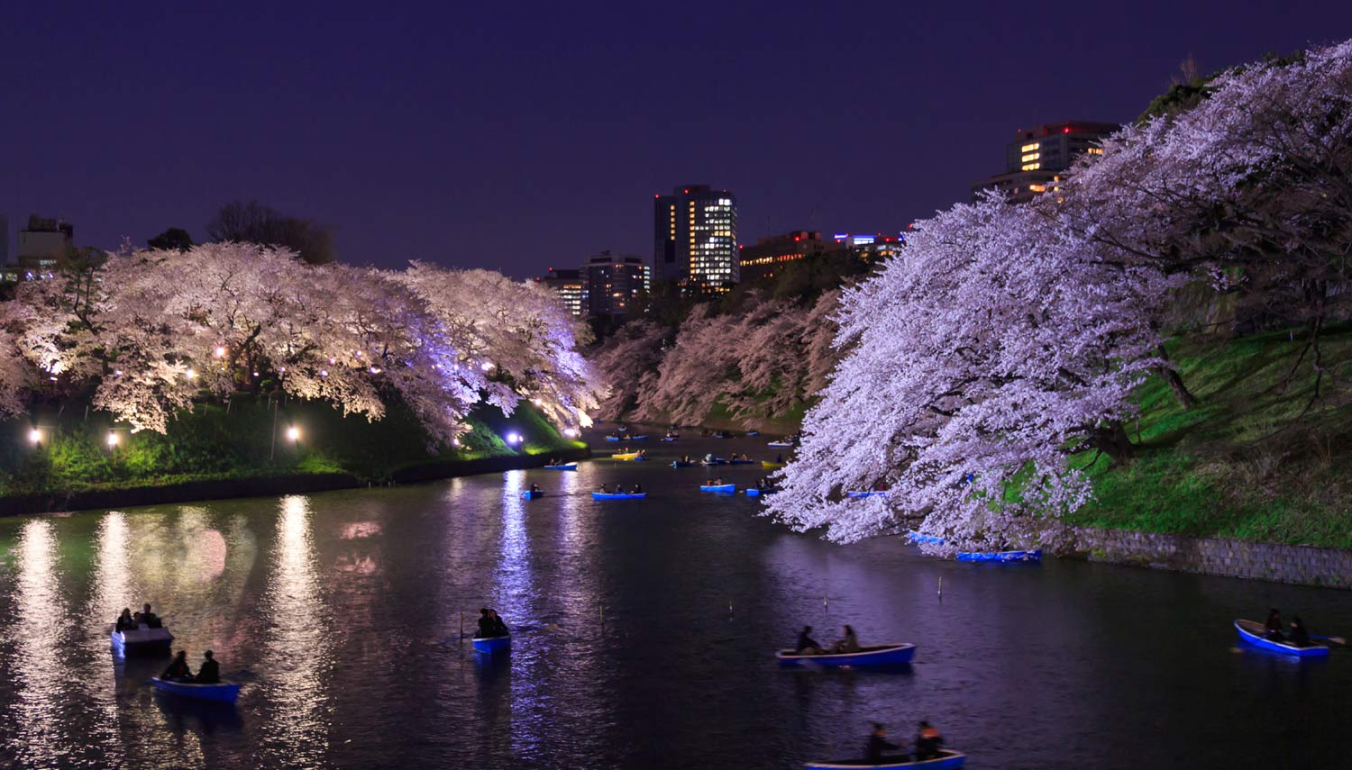 Tokyo Japan Springtime Cherry Blossoms at Night