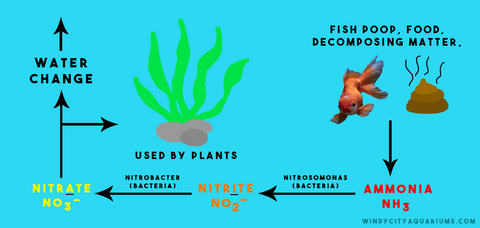 An Illustration of the Nitrogen Cycle