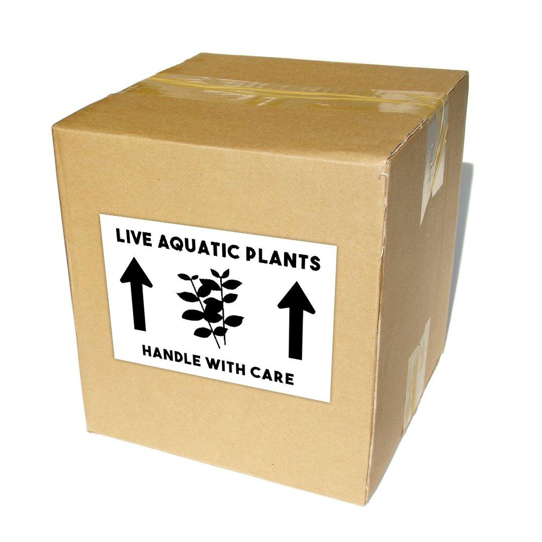 "Live Aquatic Plants Shipping Labels 4x6"" - Windy City Aquariums"