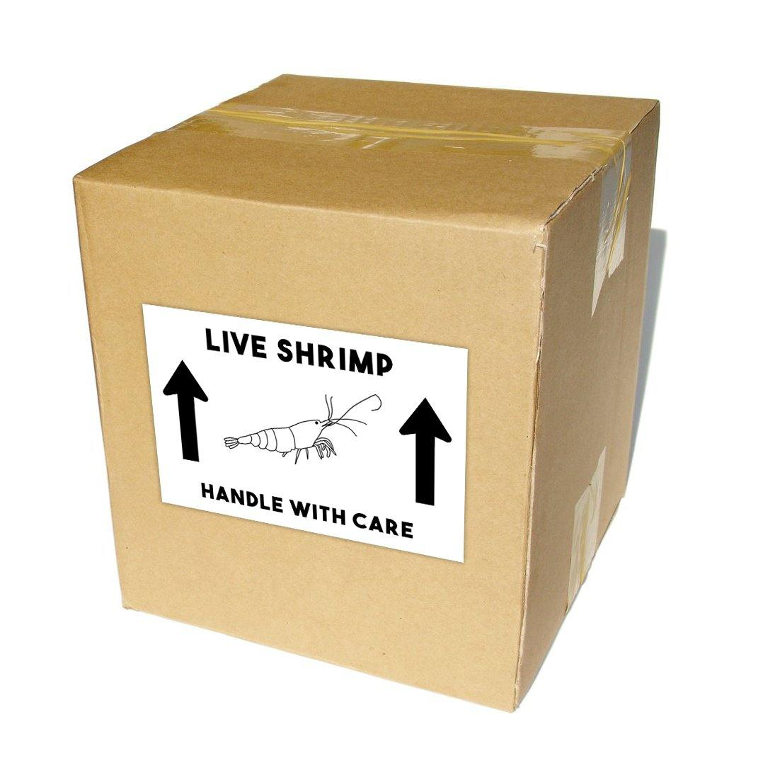 "Live Shrimp Shipping Labels 4x6"" - Windy City Aquariums"