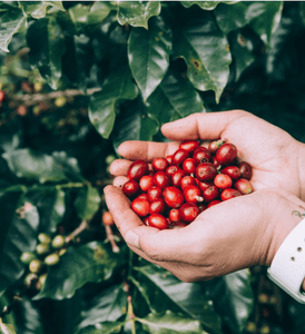 Is Single Origin Coffee Worth Your Dollars?