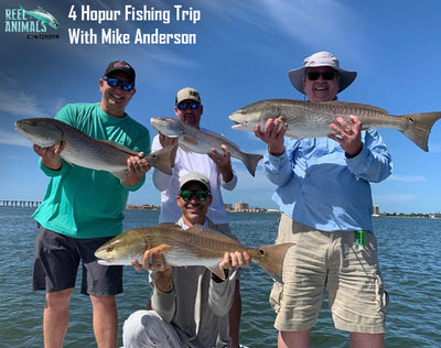 4 Hour Inshore Fishing Trip With Capt. Mike Anderson