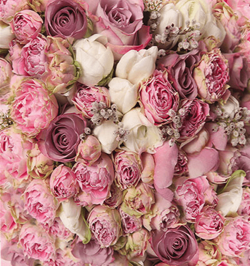 Katebackdrop£ºKate Pink White Flowers For Wedding Photo Studio Valentine's Day Backdrops