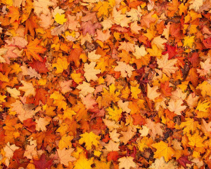Kate Autumn Maple Leaves rubber floor mat