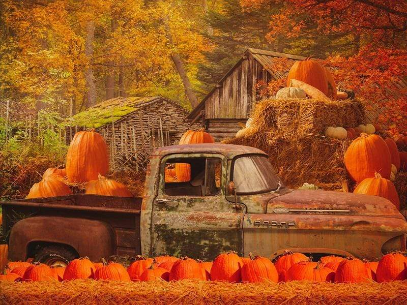 Kate Autumn Maple Forest With Pumpkins And Old Truck for Photography
