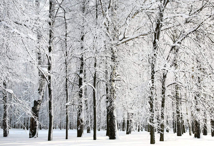 Kate Winter Snowy Trees Scenery for Photography