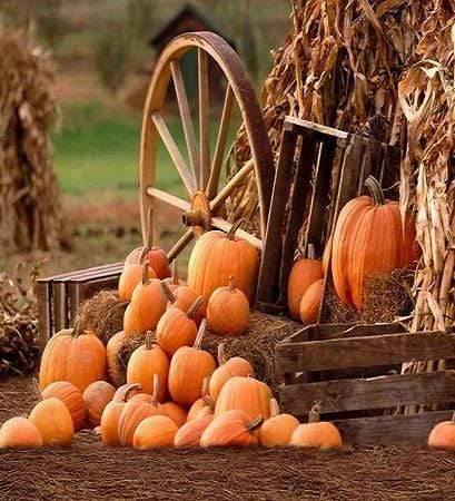 Load image into Gallery viewer, Kate Farm Harvest Fall with Pumpkin Backdrop for Halloween autumn