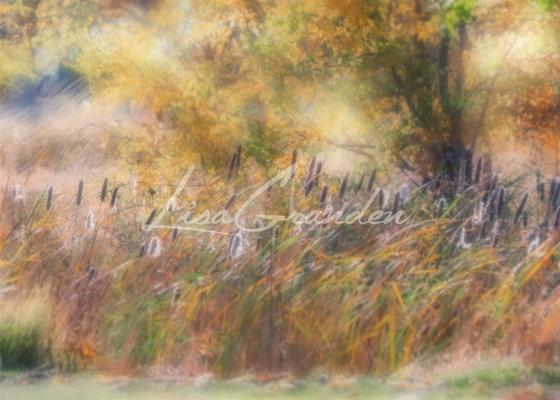 Load image into Gallery viewer, Katebackdrop¡êoKate Fine Art Cattails Backdrop for Photography Designed by Lisa Granden